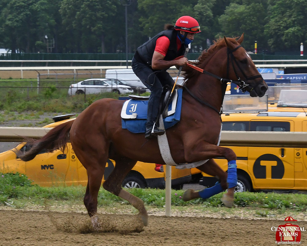 #Hurryhard, indeed! Sophomore Bonspiel has settled in at #BelmontPark and posted his first Empire State breeze this morning - 3 furlongs on the training track.<br>http://pic.twitter.com/4e3exNMRav