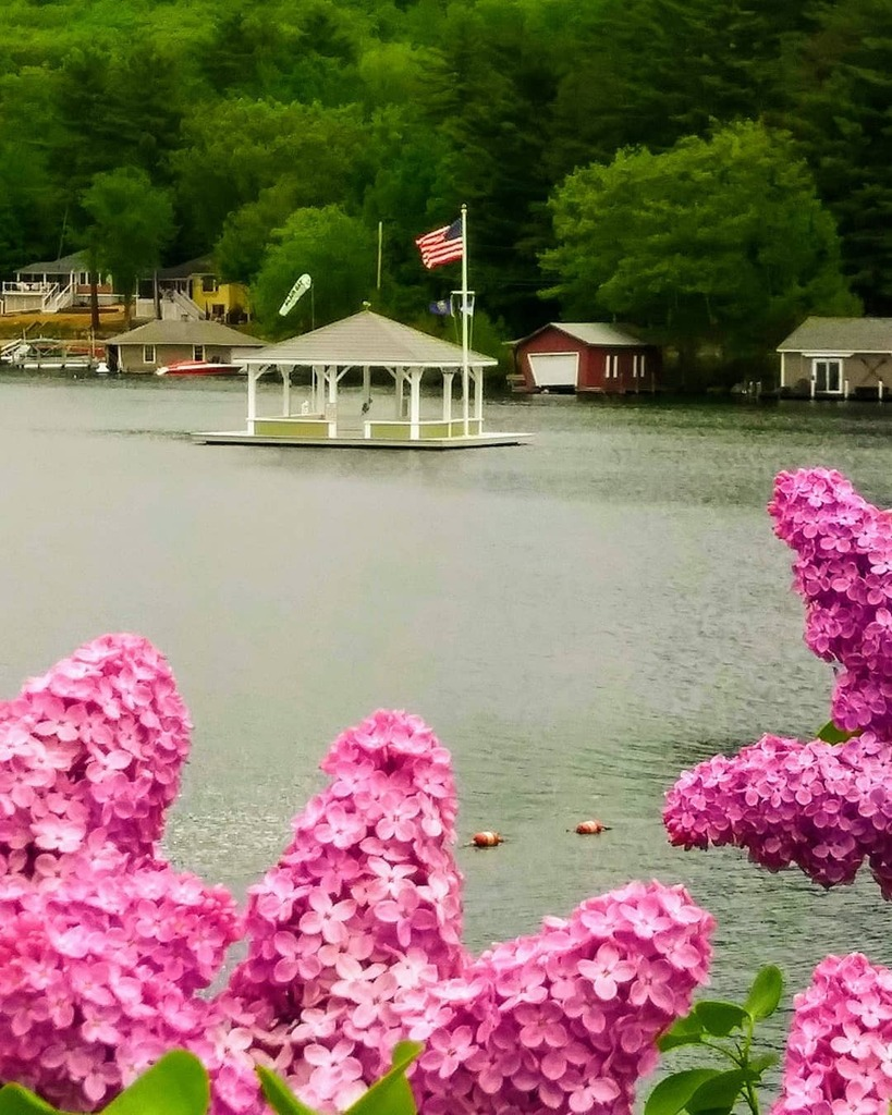 Lilacs in full bloom. Alton Bay, NH  #lilacs #lilac #lilacblossom #altonbay #lakewinnipesaukee @winnipesaukee_life #alton #altonnh #newhampshire #nh #newengland #unfiltered https://t.co/BSmBF3kIlb https://t.co/1ozW4ZJ4wT