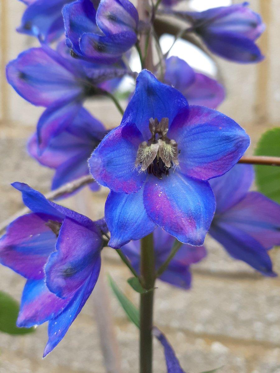 Beautiful colours in the garden #spring2020 #Flowers #colourspic.twitter.com/DSkor4pDTe