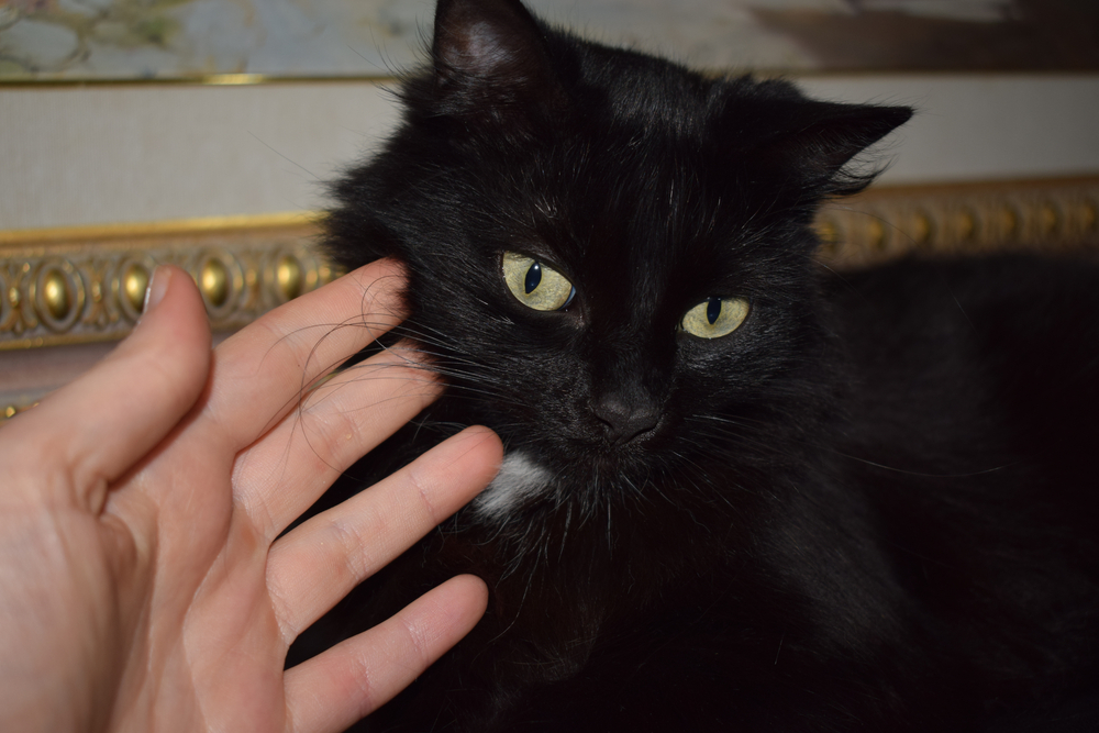 Your daily dose of Morrighan the cat.  #Cats #BlackCat pic.twitter.com/XbhfNL20w4