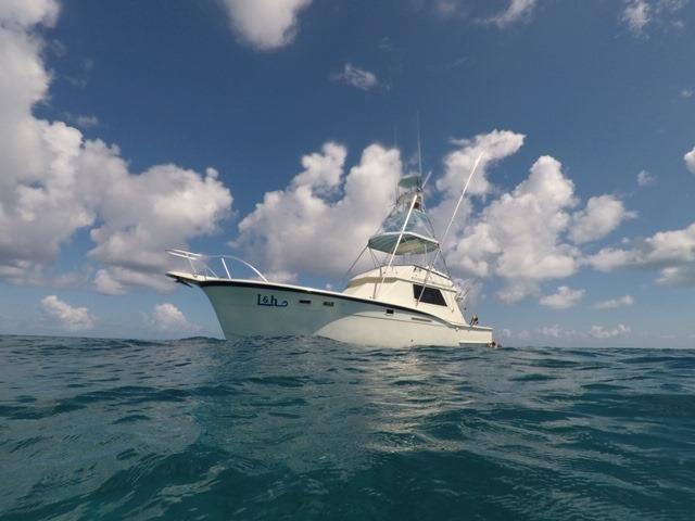 L&H Sportfishing in Miami, FL https://t.co/fuO2lL8CqF
