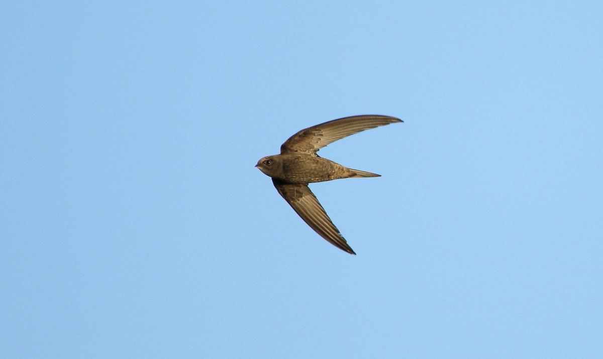 Apologies for all the Swift shots I keep posting, I did try to throw them away but this one came back #boomerang  Orgreave Lakes - Rotherham pic.twitter.com/nQNemmVCcl