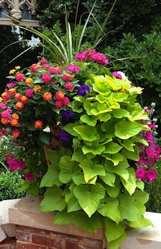 Garden container #plants https://t.co/PX9fPZeTU0