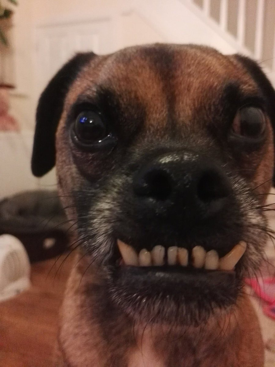 Hi everyone, Alan here! I'm sure you all heard that our beloved #Dogbus has been written off, fortunately we weren't in it. We really miss it 😔 I would be incredibly grateful if you would help my mummy buy a new one! ❤️🐾 donorbox.org/riseup-dogbus #FridayThoughts #animalrescue