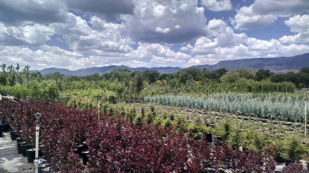 At Verde River Growers we are passionate about gardening in the Southwest, and our knowledgeable staff is here to help you grow a successful garden! We offer expertise: #VerdeRiverGrowers #Plants #Gardening https://t.co/srgUE8VyBw https://t.co/AYkv2zeRqG