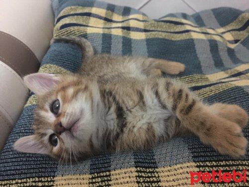 #İstanbul #Kedi Çok #Oyuncu Sevimli Kızımız