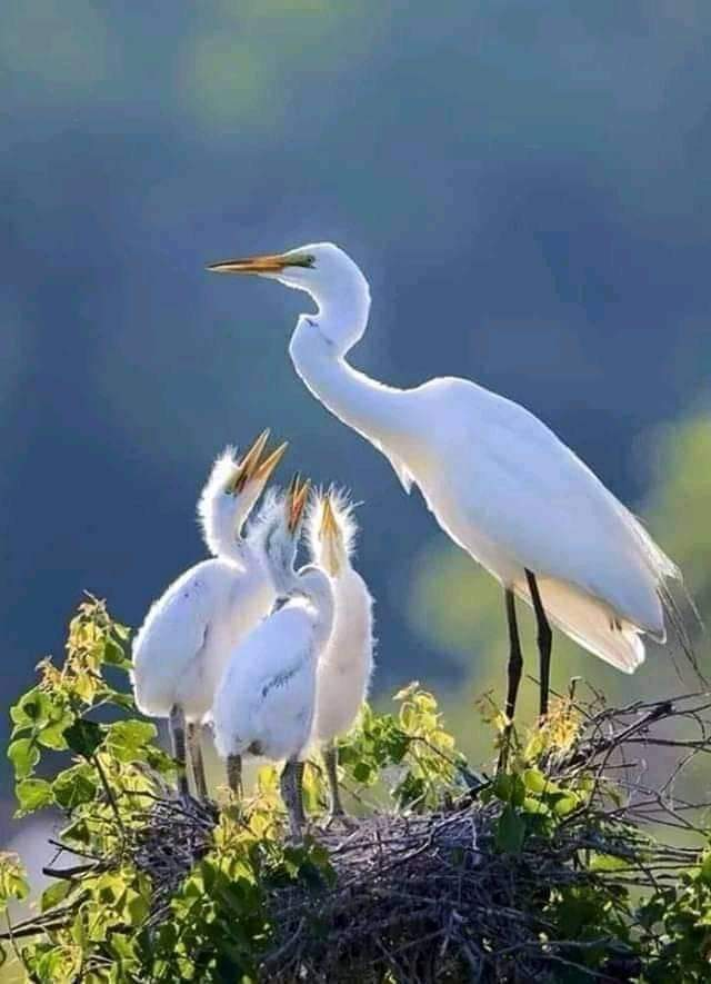 Wonderful time! #happyfamily  #birds #Flowerspic.twitter.com/gdf0aeagQr