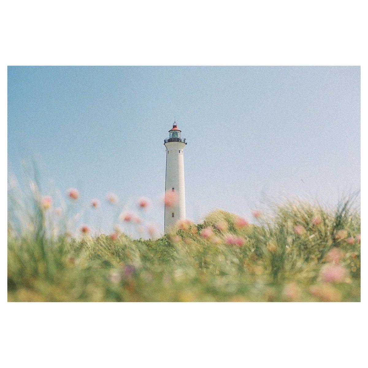 Summer | Leica MP | Portra 160 #analog #analogue #analogfilm #analogphoto #film #filmphoto  Instagram: scottish_swan pic.twitter.com/eiQe6SivQC  by Analog Process