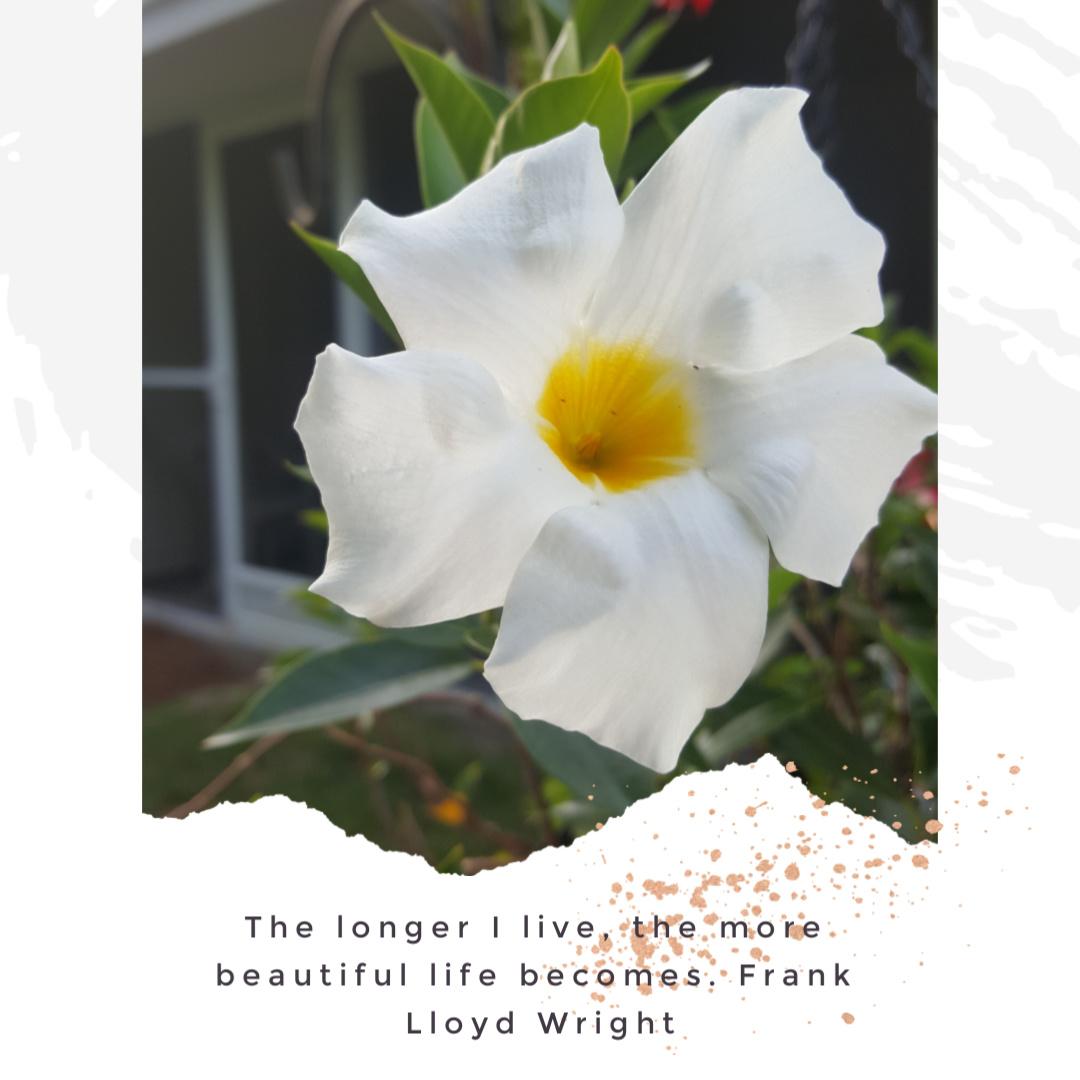 Another flower I saw on my walk. So pretty. #springtime #flowersinbloom #beautypic.twitter.com/d9gpLygAjF