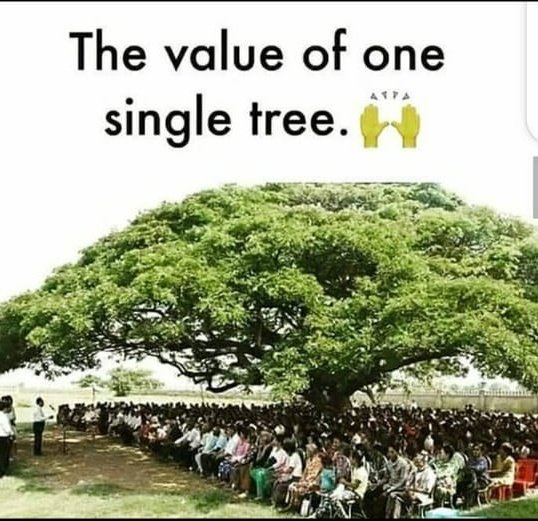 The value of one single tree. #Goodmorning 😊😊 #nature #love #savetree #SaturdayThoughts https://t.co/kYbBXUBsJi