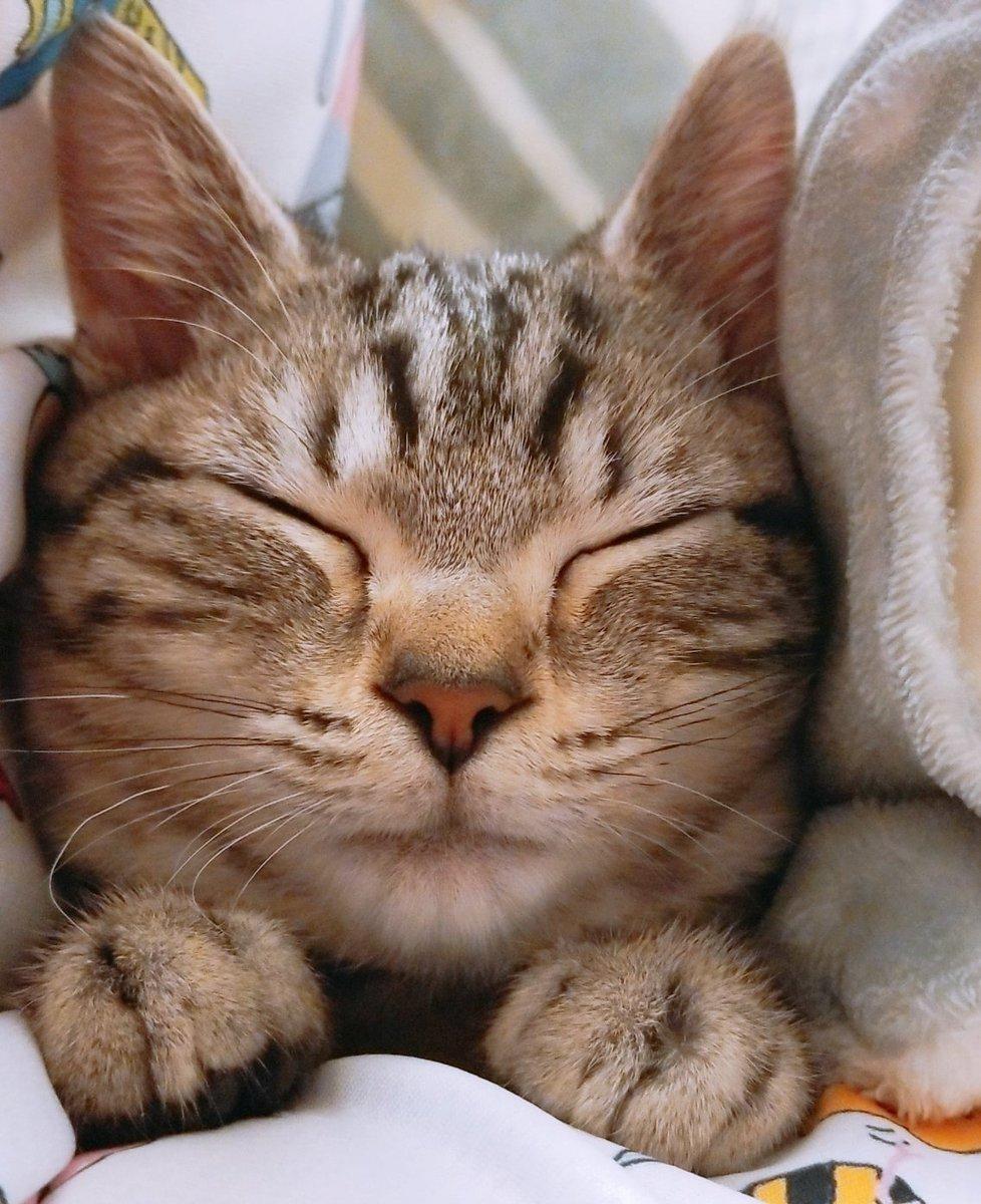 ころモンTシャツと毛布を身に纏いながら寝てるてまにゃんさんです💤