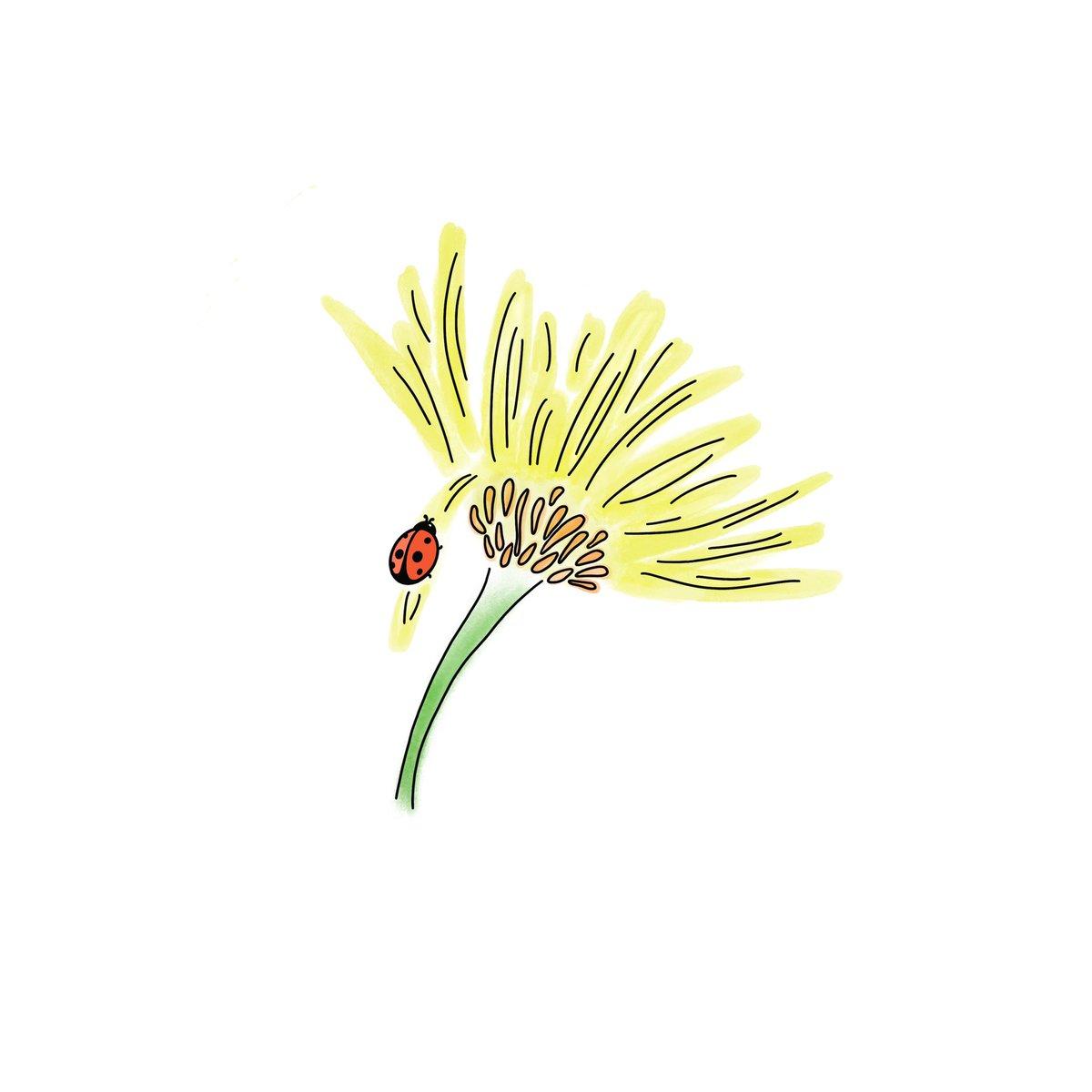 #drawindifferentstyles N.3. Water and ink improvisation. #procreatewatercolor  #drawindifferentstyles #daisydrawing #digitaldaisy #illustrate #illustration #illustrationoftheday #artchallenge #drawwithinyourstyle #drawchallenge #digitalartwork #procreateillustrationpic.twitter.com/neWbz9AU8f