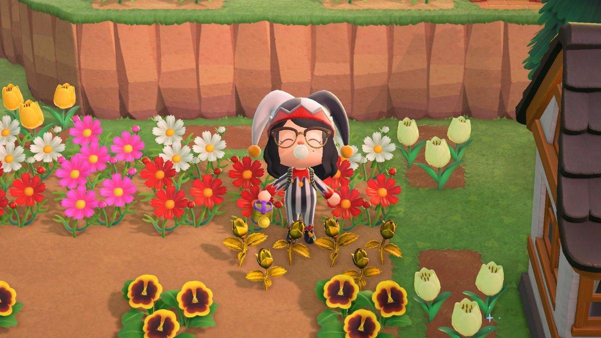 finallyyyyy golden roses!!!!! #AnimalCrossing #ACNH #NintendoSwitch