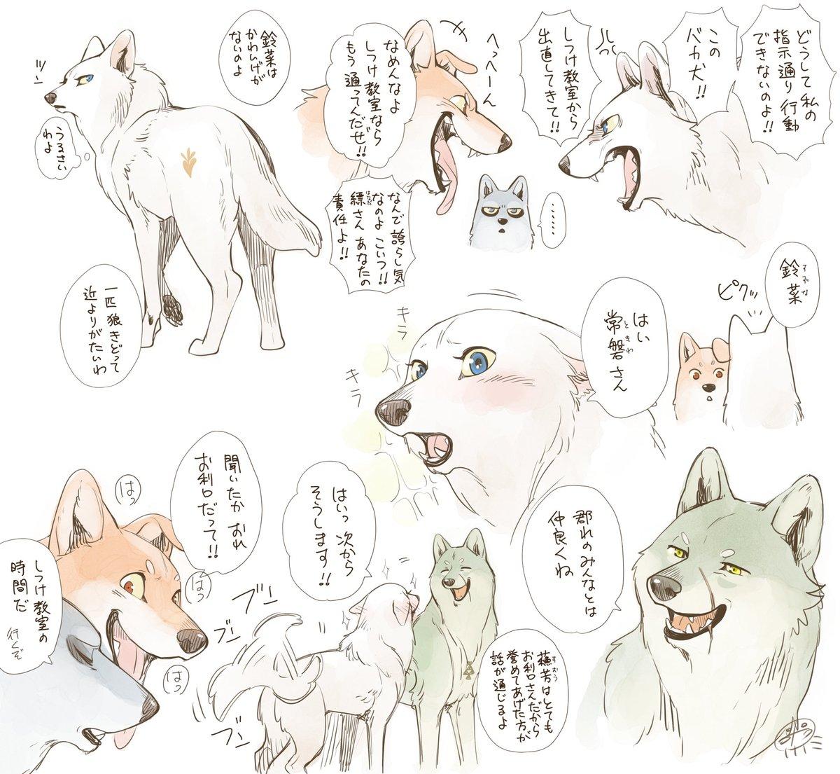 三峯の狼 #こりせんまん