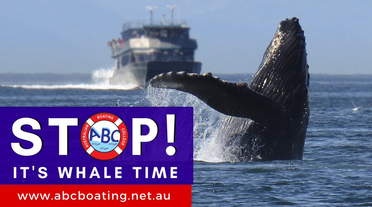 Every year, humpback whales & southern right whales migrate along the NSW coastline. They head north to the warmer waters throughout June and July and return south around September to November.  Whales require 'personal space' please keep your distance.  #whalewatching pic.twitter.com/8JJY5sdf7o