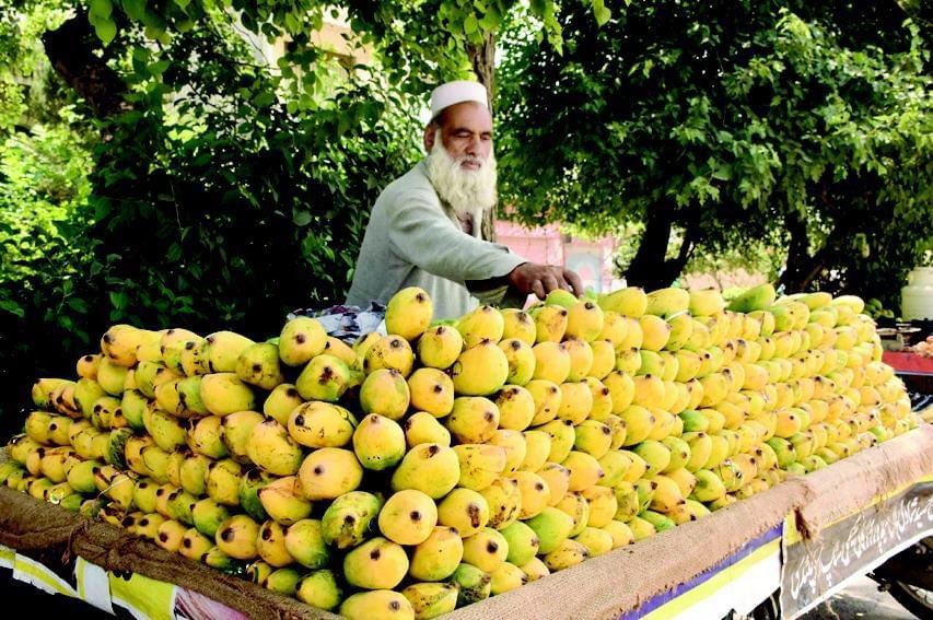 Right time to strengthen immunity. Pakistani delicious #mangoes, #peaches& #cherriesare fully ripe.Pak is the 5th largest producer of mangoes in the world. Vitamin-richi mangoes are enjoyed & loved in #Azerbaijan as well (price for 1 piece reachs sometimes $10 in) pic.twitter.com/yfXcjAdPjZ