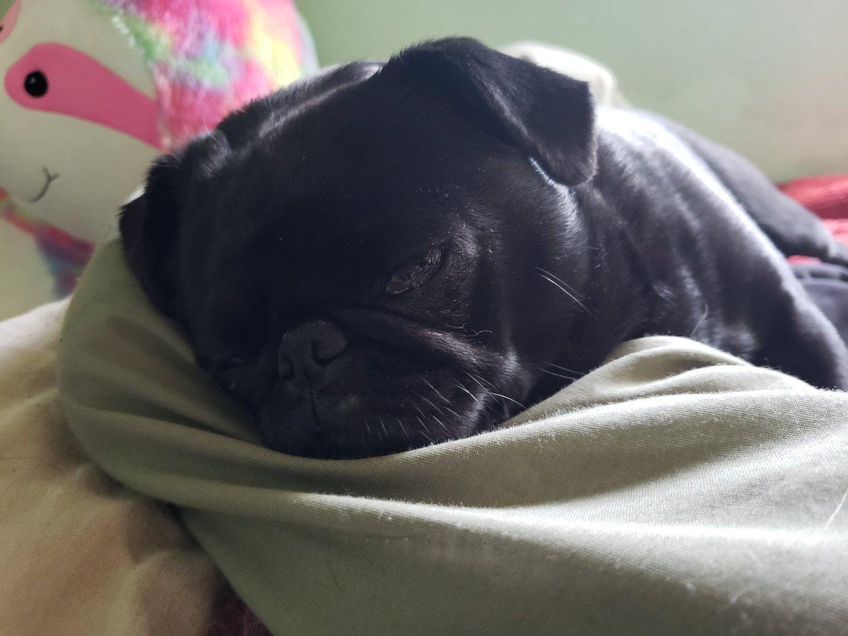 It's sleepy pug time. #pug pic.twitter.com/fEdFwAZGMl