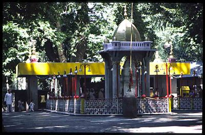 We spent every summer in #Srinagar. If we were lucky, we would get to visit #Tulmul on this bod doh(बड़ा दिन).Sitting under the shade of #Chinar 🍁 trees on mats after a bath in the cool stream, offering Kand(sugar)to Devi Ma, enjoying hot #Halwa & #loochi is a precious  memory❤️