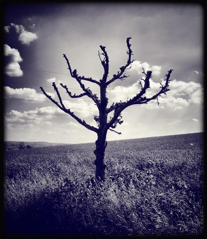 ... not alive ... #tree #fields #countryside #cloudscape #nature #photography #clouds #bnw  #monochrome #mood #atmosphere #dream #symbol #metaphor #magic #spell #darkvibes #spirit #gothic #mystery #secret #imagination #afterlife #silence #solitudepic.twitter.com/MSIB6YdwPm