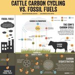 Image for the Tweet beginning: While fossil methane and livestock