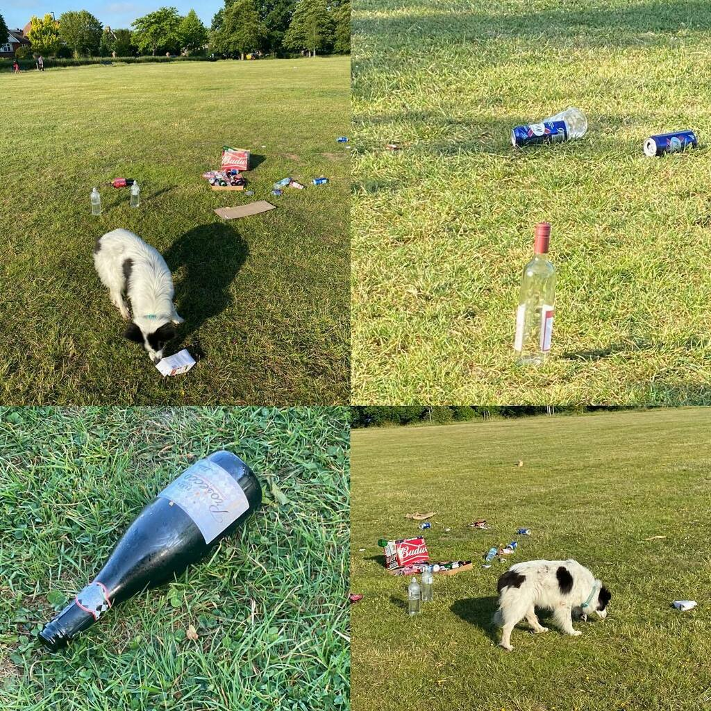 The dog detective suspects there've been some alcohol fuelled gatherings in the park