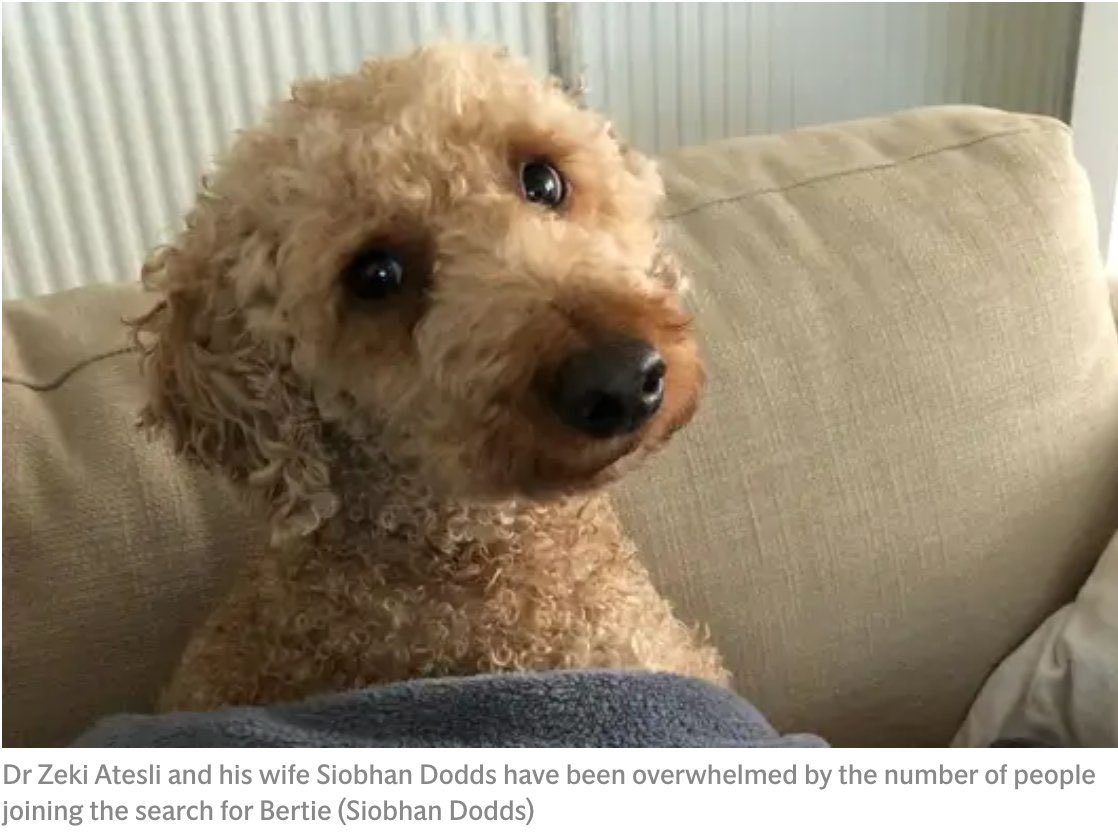 Dear @OfficialBHAFC our poor lost dog Bertie, was last sighted 4 miles from the Amex, 38 days ago. You have so many fans in the right area, please would you RT for us? We so desperately need a sighting to narrow our search. Thank you 🙏 #FindBertie