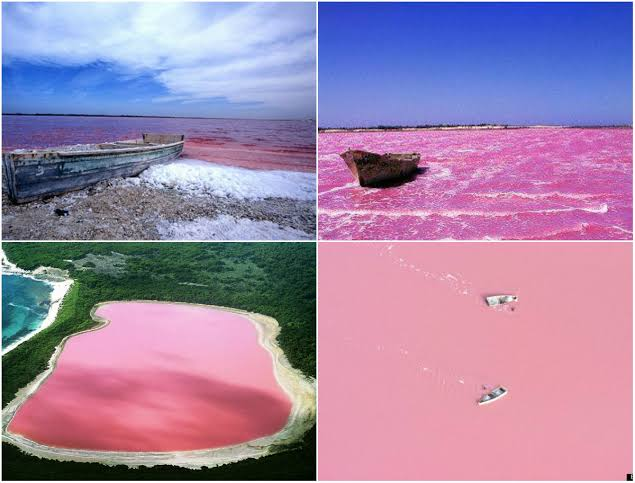 There is a pink lake in Senegal called Lake Retba or Lac Rose. It lies north of the Cap Vert peninsula of Senegal in Africa. It's high salt content causes the lake to turn pink in certain months of the year. Would you like to explore the pink lake of Africa?   #tourism #Africanspic.twitter.com/iXaXkSqd3G