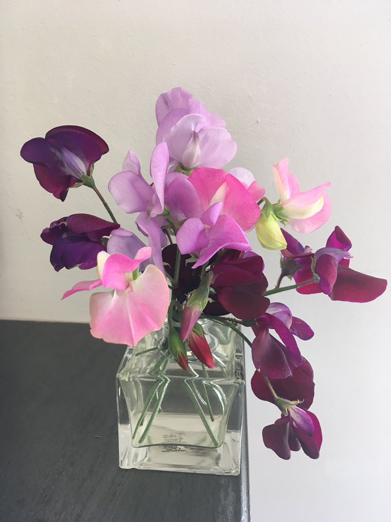 Sweetpeas always a favourite of my dads .. beautiful scent   #happymemories  #StaySafeStayHealthypic.twitter.com/V2IFw3dzwy