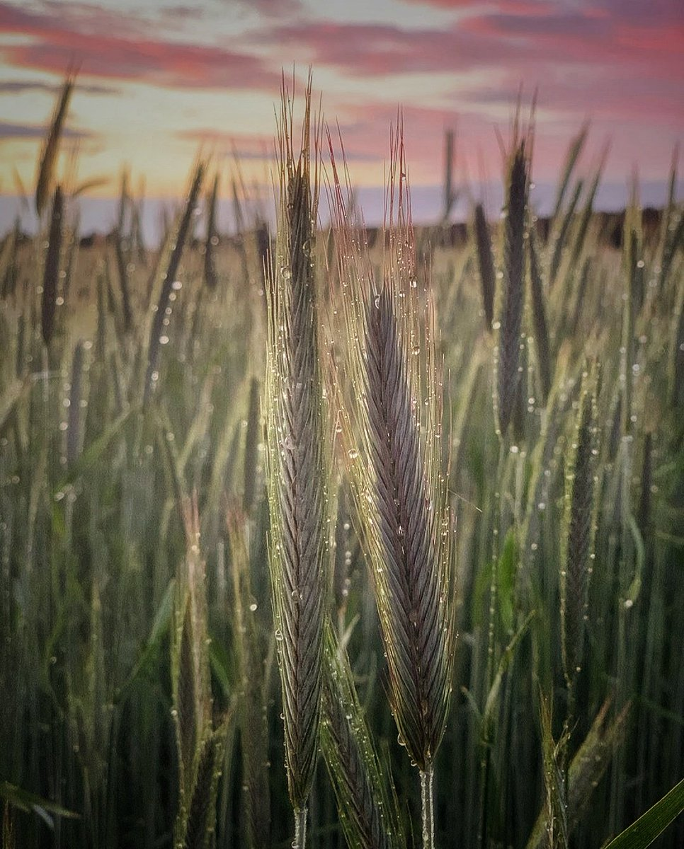 Beautiful morning.. #sunrise #photography #mobilephotography #nature #naturephotography #naturelover #morninghike #beauty #puravida #raindrops #HappyWeekend #happySaturday #missyou #lifeisagiftpic.twitter.com/sIheICNOL7