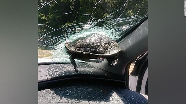 1000RT:【米高速道路】飛んできたカメ、走行車のフロントガラスに突き刺さる男性がガラスの破片で軽傷を負い、カメは命を落とした。地元警察は、カメがなぜ宙に浮かんだのか見当もつかないと困惑。