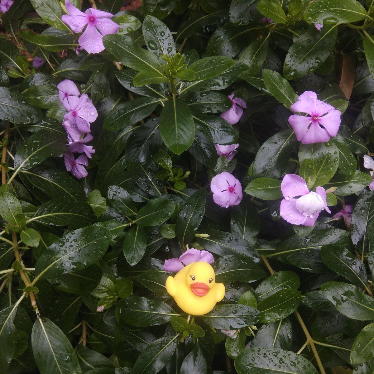 #Flowerpower weekend.   #BLR #BengaluruRains #cubbonpark #bengaluru #weekendvibes #wanderingquacks https://t.co/DJavAbClsn