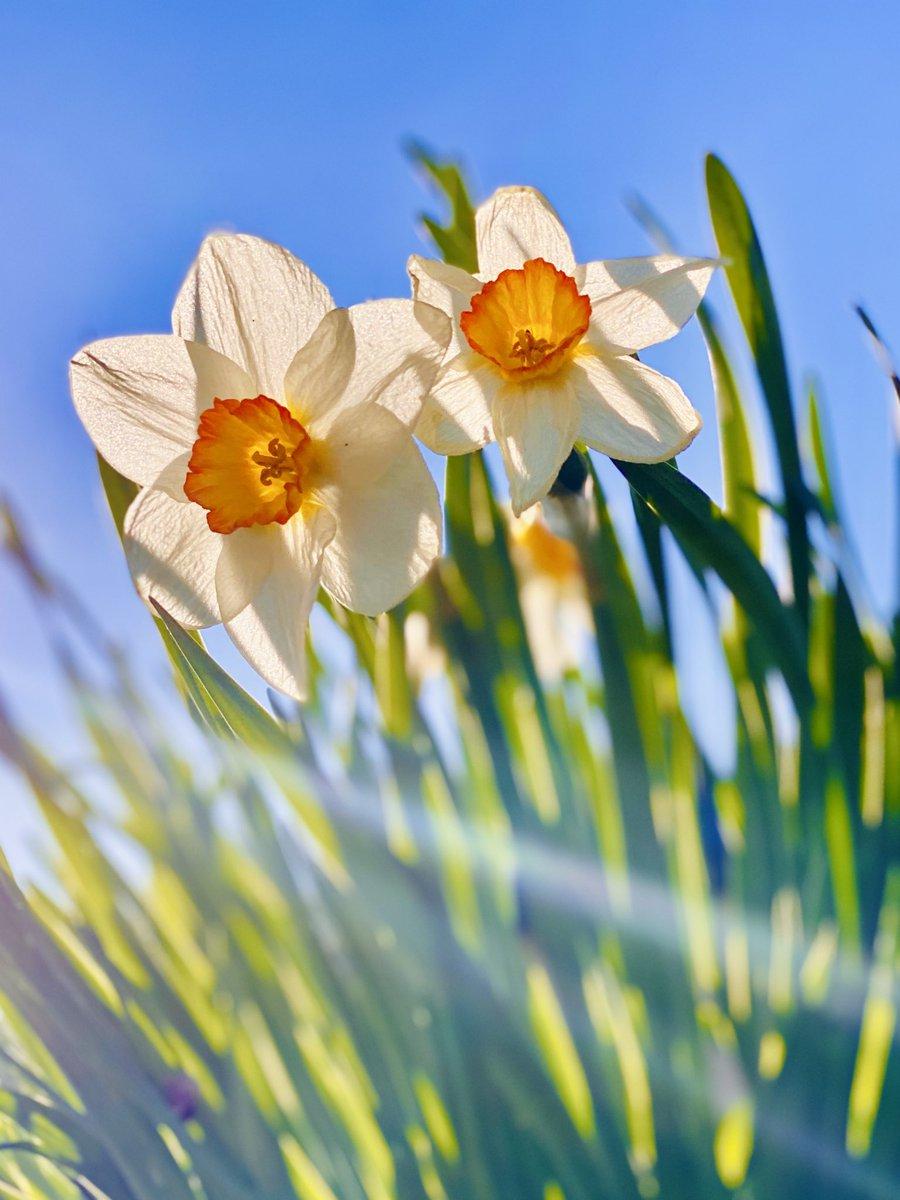Beautiful, Beautiful Saturday . #NaturePhotography #flowers #animals pic.twitter.com/ReI2epQzwz