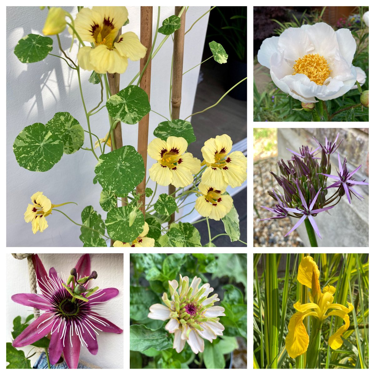 Happy to join in with my first #SixonSaturday and share my love for flowers around my garden 🌼🌿🌸 @cavershamjj https://t.co/H818RyE5oF