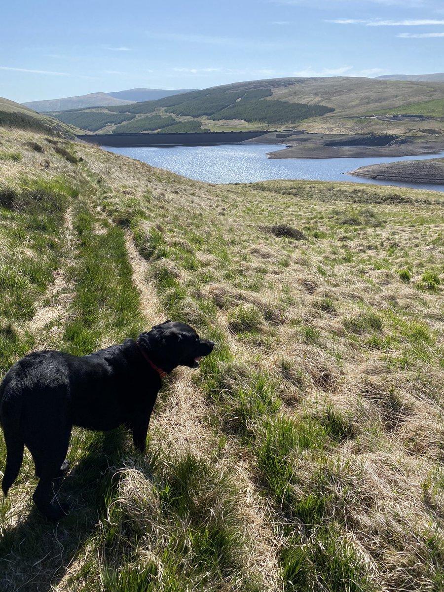 Wee stroll with Hugo! Frandy reservoir well down. #Summer in #Scotland ☀️☀️☀️☀️☀️