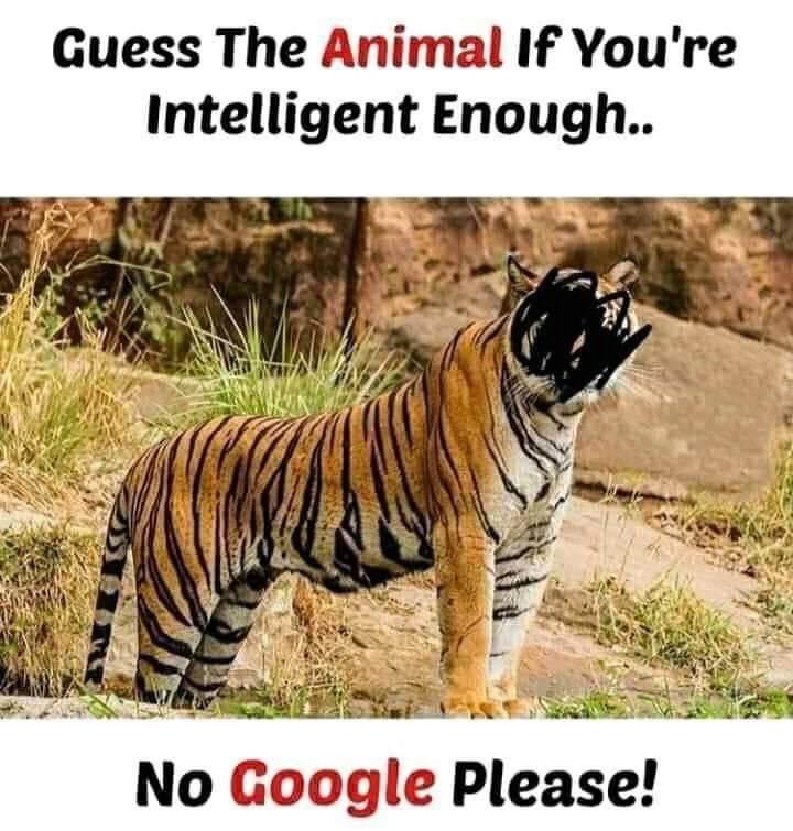Rusty zebra it is.pic.twitter.com/9KXTwNG6Fa