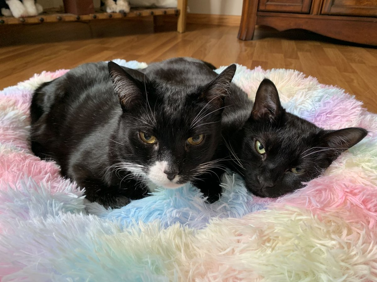 This is the best bed ever. I have three of them and I need another one. They're fluffy and machine washable and they're the best - Cynthia L. 💙 #amazinglycat #marshmallowbed