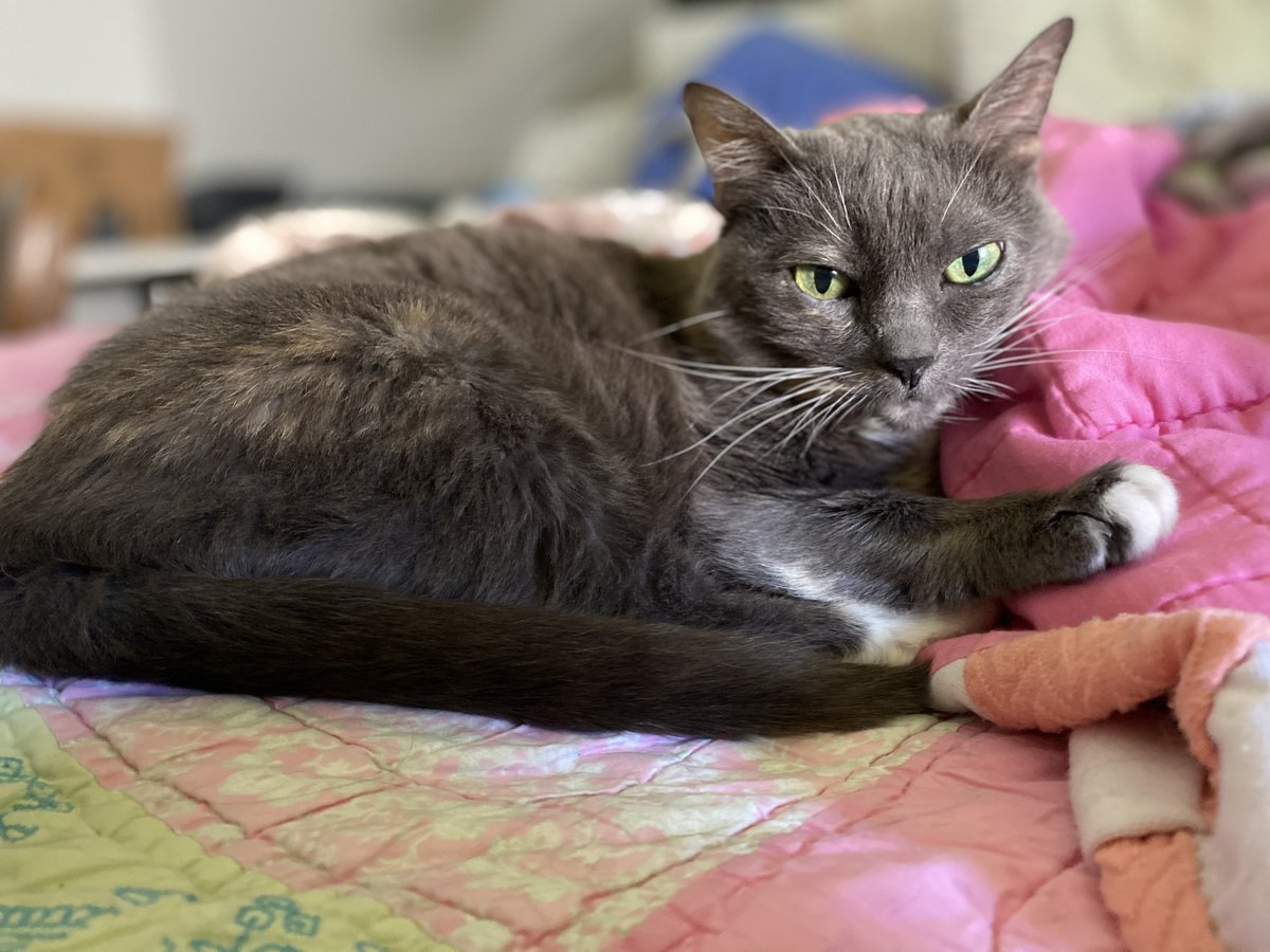 Katza Pooh is thirteen years young and looking for her forever home! Can you give this sweet senior gal a nice cozy spot to sleep and a window to watch the world go by?