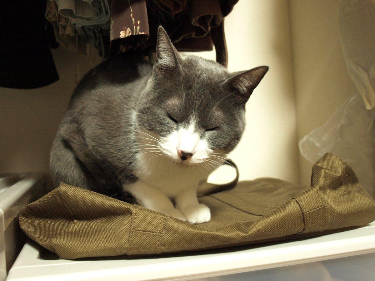 大好きなクローゼットがやっと開いたのニャ。嬉しくて入ったんだけど、眠くなってきたニャ。#猫好きさんと繋がりたい#もふもふチャレンジ