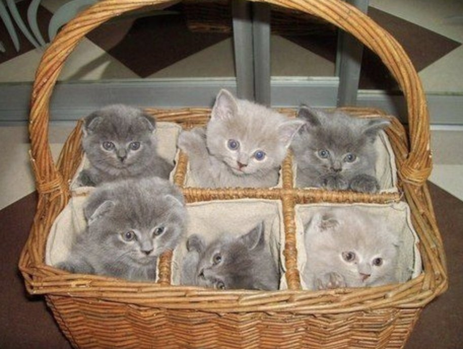 #WritingCommunity!  #writerslift! #amwriting! #ShamelessSelfpromoSaturday!   Drop your #book, #wip, #website, #blog, #poetry, #coverart...  #Follow, #RT, #heart, #comment  We follow back!  Bonus: I hear you're stressed, so here's a basket of kittens for good cheer!pic.twitter.com/mzOWP1Zg8i