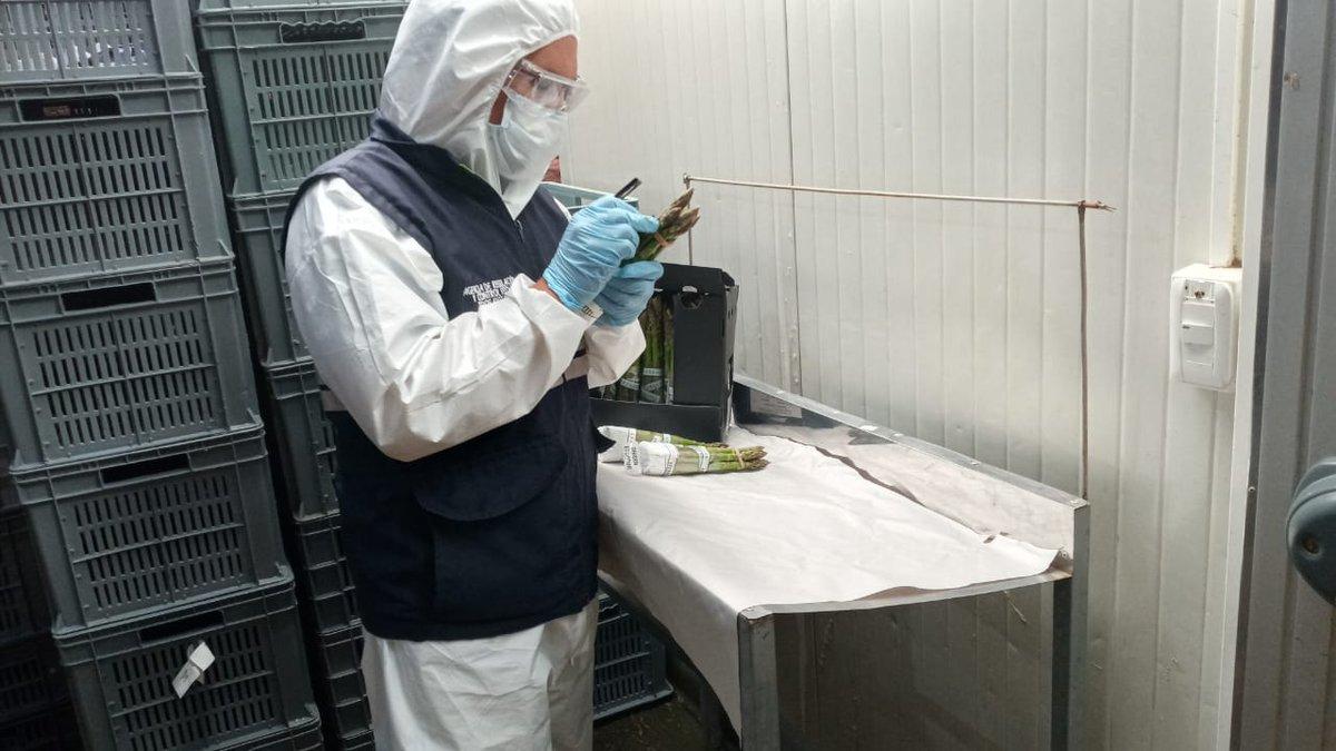 #Imbabura | #Agrocalidad continúa trabajando por el país, realiza la inspección fitosanitaria de espárrago en el cantón Urcuquí, parroquia Pablo Arenas con destino Hong Kong  *#CertificamosCalidad* *#ElAgroNoSeDetiene*pic.twitter.com/WF2IyGXp4Y