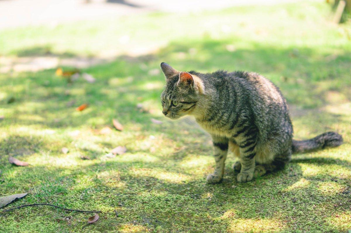 餌発見!  #sony #α6600 #カメラ好きな人と繋がりたい  #写真好きな人と繋がりたい  #モデルさんと繋がりたい  #モデル募集  #被写体募集 #followme  #photography  #photo #animalphotography  #animal #fukuoka_camera  #fukuoka  #cat  #catstagram