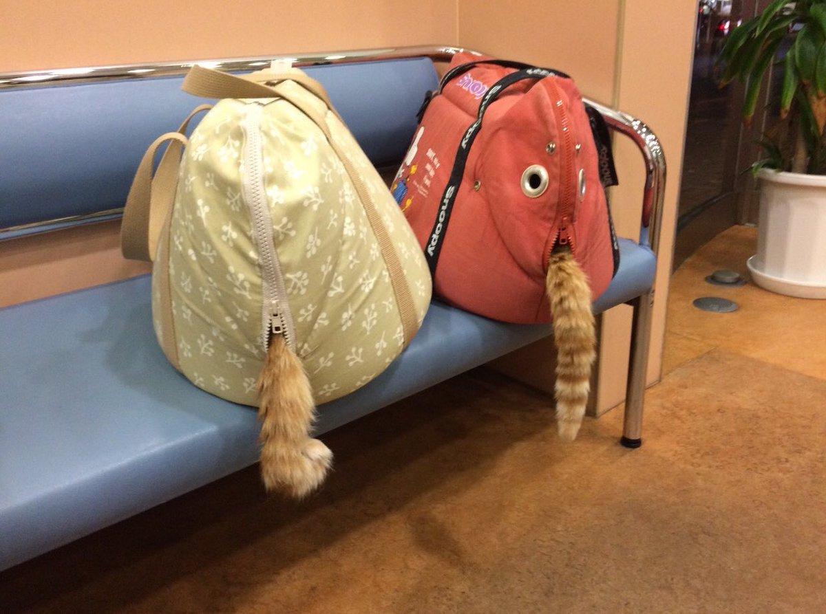 RT @ru_ruru831: 動物病院の待合室での様子 https://t.co/9f44sAMa7h