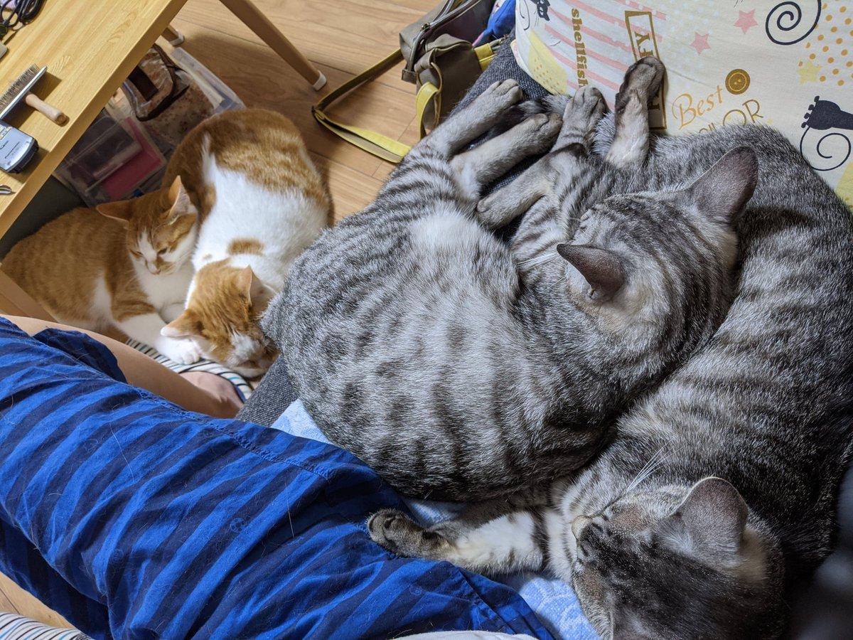 密です☺  #やすみんの世界猫まみれ #ねこ #猫 #cat #cats #猫好きさんと繋がりたい