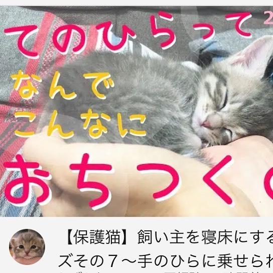 . YouTubeを更新しました。  Updated YouTube.    #保護猫  #子猫 #kitten  #cat #猫のいる暮らし  #ねこすたぐらむ  #catstagram  #うずらねこ  #youtube