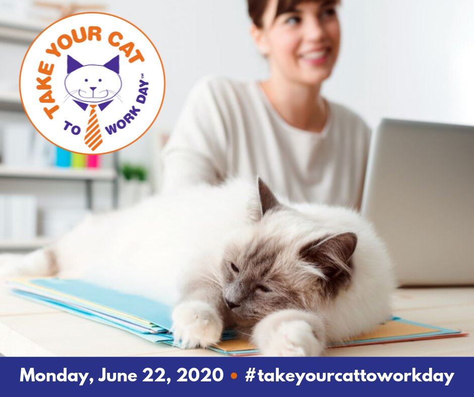Don't worry, cat lovers. There's a day for you, too. Plan to celebrate #TakeYourCatToWorkDay on Monday, June 22nd! Visit  to learn more. #cat #officecat #caturday