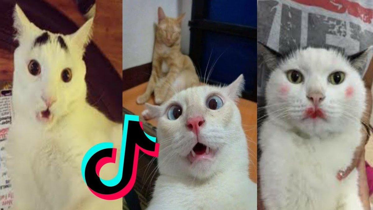 Cats being..CATS😼~Tiktok Compilation! PART1 -  Cute Ca ...   #Cats #Cat #Kittens #Kitten #Kitty #Pets #Pet #Meow #Moe #CuteCats #CuteCat #CuteKittens #CuteKitten #MeowMoe #CuteCatsVideos #CuteKittensVideos #CuteKittiesVideos #CuteMeowVideos