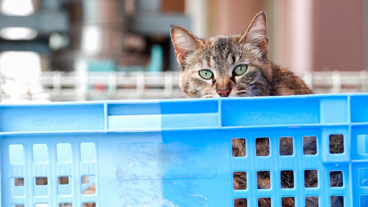 新しい動画を公開しました!#僕らの居場所は言わにゃいで #猫動画 #野良猫 #自由猫 #猫 #ねこ #cat #straycat #さくらねこ #sonyalpha #α6400 #タムロン #A056  #カメラ好きな人と繫がりたい #猫好きさんと繋がりたい