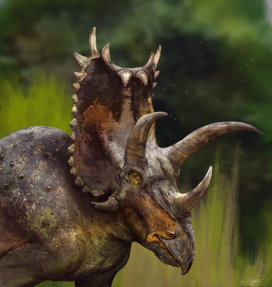 Some #Ceratopsian #illustrations created over the past few weeks: Pentaceratops, Einiosaurus and Styracosaurus! #paleoart #NaturalHistory #prehistoric #scientificillustration #dinosaurs #nature #wildlife #digitalart #animalart #naturelovers #reptilespic.twitter.com/EBO1AEVzp7