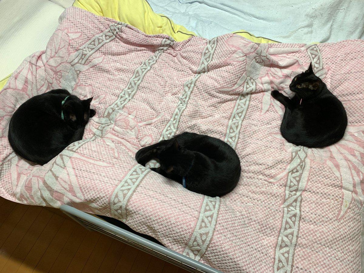 Distance Sociale. #chatnoir #blackcat #黒猫pic.twitter.com/dfDYpFE13J