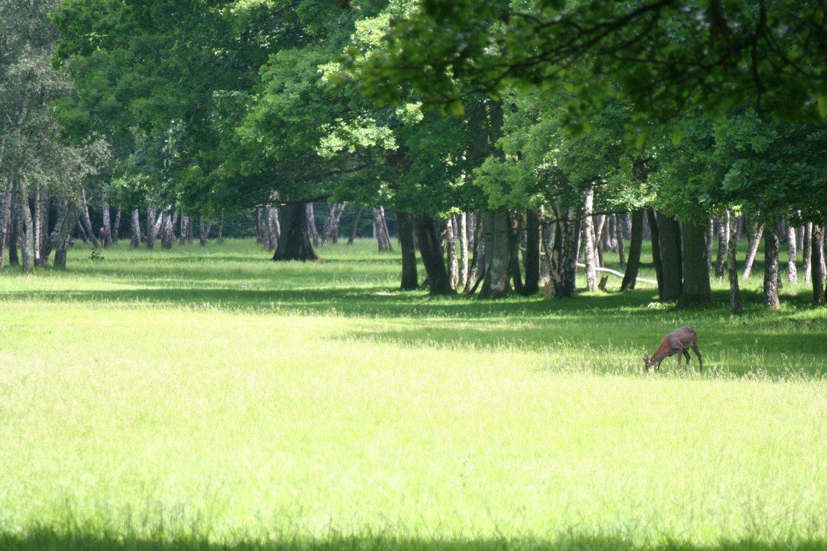 Magnificent green landscape pic.twitter.com/wu1rY4JEGv